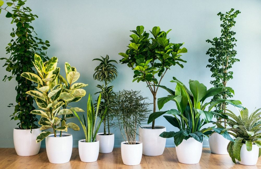 Solution  to Indoor Pollution is to go GreenResolution