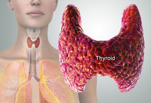 Thyroid and lifestyle intervention