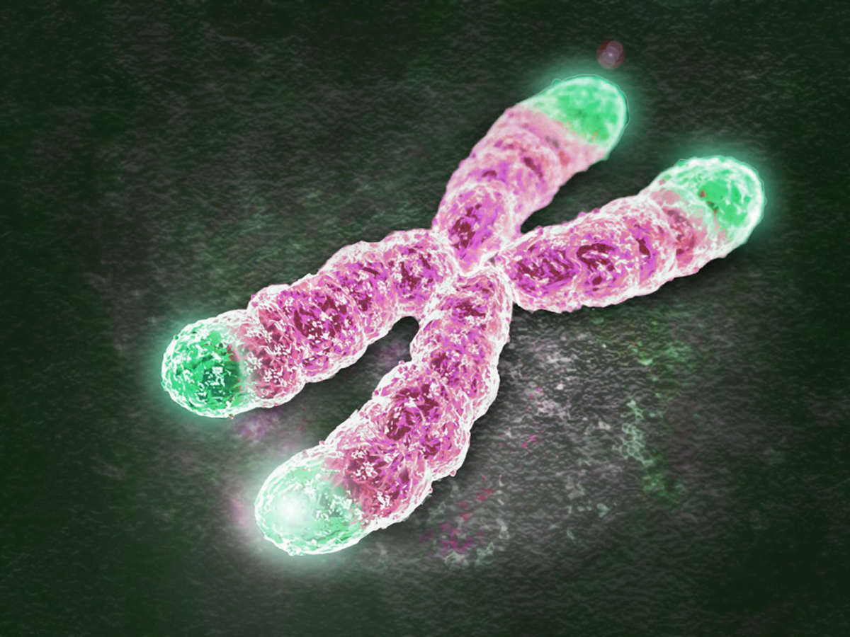 TELOMERE: A PATHWAY TO PSYCHOLOGICAL WELLBEING AND HEALTHY AGING